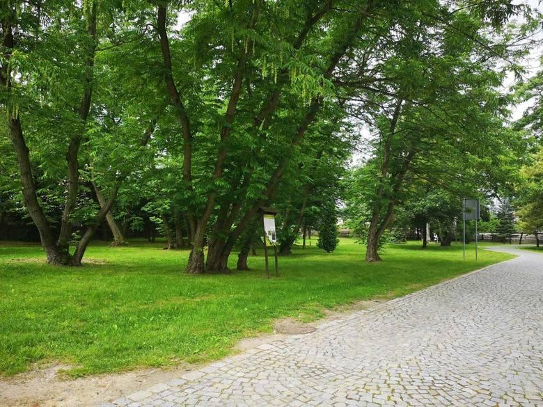 Wkrótce ruszy remont zabytkowego parku w Tułowicach.