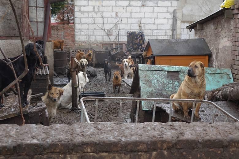 FILM i ZDJĘCIA z akcji w Starym Czarnowie. Zwierzęta żyły w koszmarnych warunkach