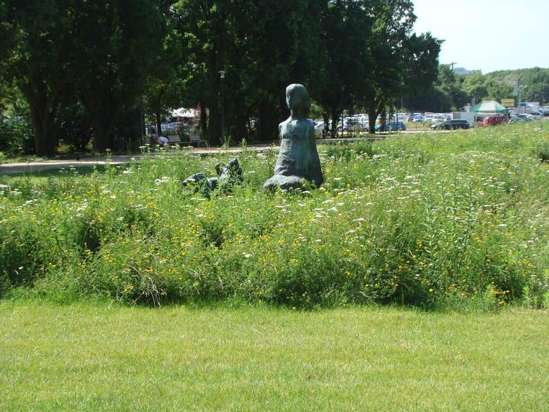 Czy da się zasiać w Poznaniu łąki kwietne? Zdaniem Zarządu Zieleni Miejskiej jest to możliwe, ale tylko w miejscach, które nie są jeszcze zagospodarowane