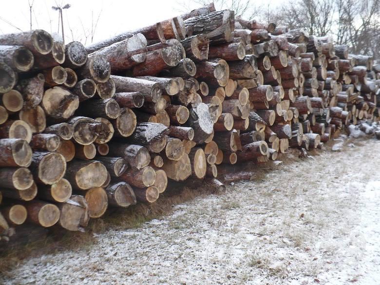 Drewno z wycinki opałowe liściaste, iglaste – 114,92 m3 – cena 8100 zł.POLECAMY: WOJSKO WIETRZY MAGAZYNY. CO KUPISZ ZA NIEWIELKIE PIENIĄDZE W SKLEPIE