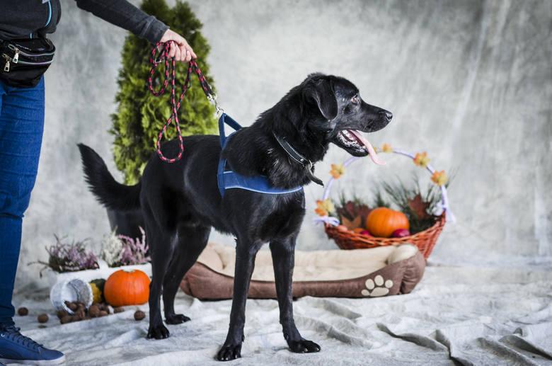 Nie kupuj! Adoptuj! Psy ze słupskiego schroniska to wspaniali modele – mamy nowe zdjęcia z sesji zdjęciowej