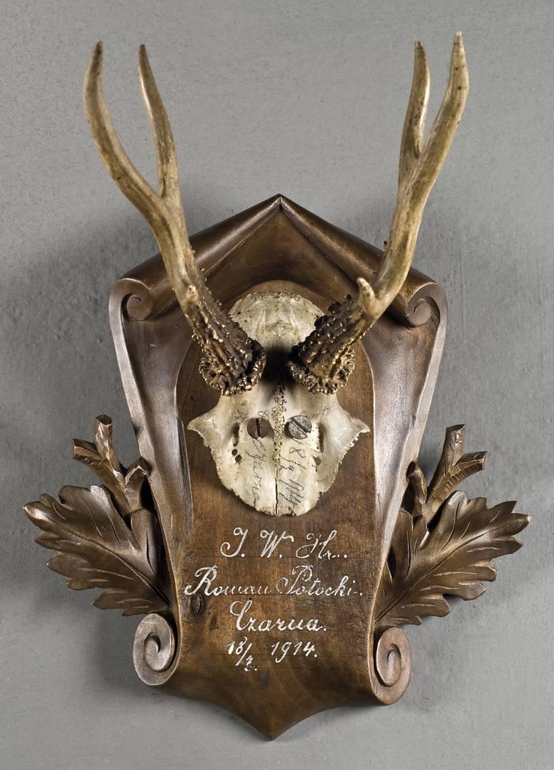 Ostatnie trofeum Romana Potockiego z 1914 roku. Zbiory Muzeum-Zamekw Łańcucie.