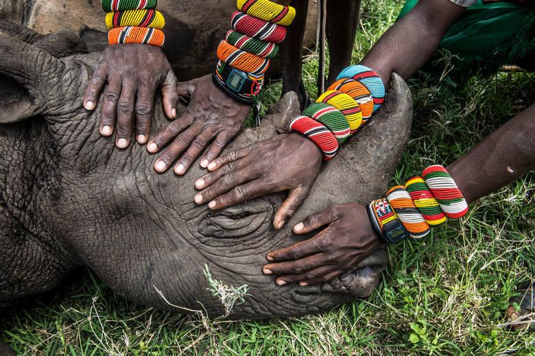 """WORLD PRESS PHOTO 2015. Drugie miejsce w kategorii """"Natura - zdjęcie pojedyncze"""". Grupa młodych wojowników z plemienia Samburu po raz pierwszy w życiu widzi nosorożca."""