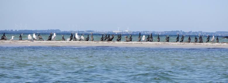 Na tym pasie piachu można lądować, ale nie należy płoszyć ptaków wodnych, dla których mielizna jest prawdziwym rajem