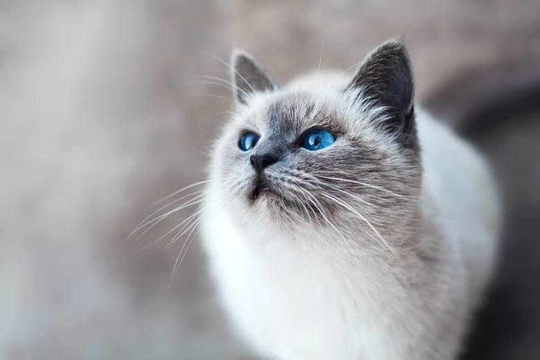 Zoopsycholog: Pozwólmy kotom oglądać programy przyrodnicze i słuchać klasycznej muzyki