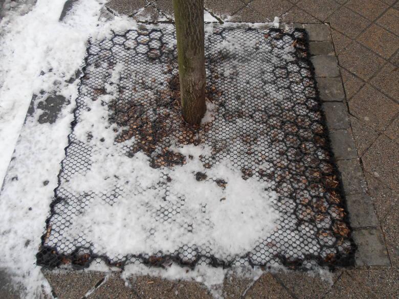 Firma Alcor z Opola wymyśliła i opatentowała sposób na absorbcję wysypywanej zimą soli, która powoduje usychanie drzew