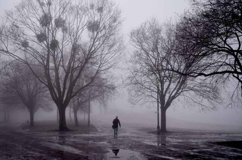 Mgła w Poznaniu. Magiczny park Kasprowicza