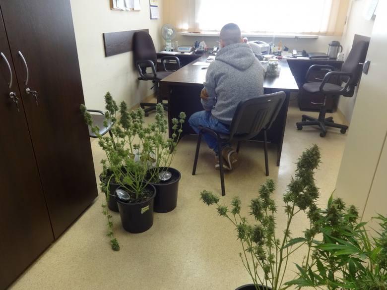Narkotyki Zabrze: Zabezpieczyli prawie 1600 działek narkotyków! [ZDJĘCIA + WIDEO]