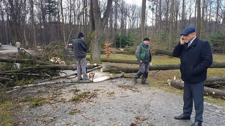 Aż 87 powalonych drzew, zniszczony jeden mostek, kilka ławek, kosze na śmieci i ogrodzenie - to bilans wichury, która przeszła nad naszym regionem w