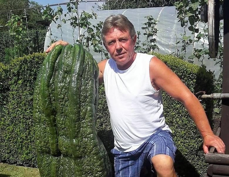 Rekordowe warzywa urosły w Raciborzu! Są największe w Polsce.Zobacz kolejne zdjęcia. Przesuwaj zdjęcia w prawo - naciśnij strzałkę lub przycisk NAST