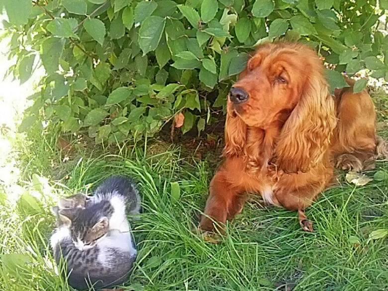 Ares jest bardzo towarzyski, jak widać na załączonym obrazku. To pies p. Katarzyny.Tu możesz zagłosować na kandydatów w kategorii pies:Pupil Roku 2016