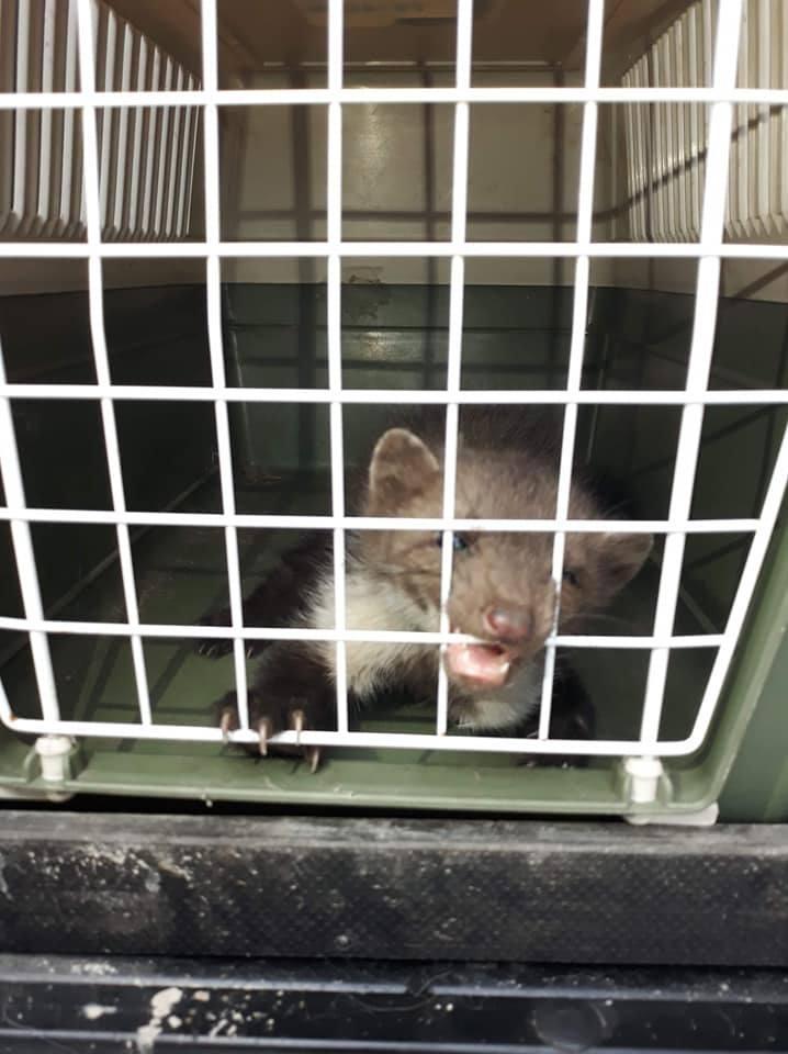 Pracownicy Animal Patrolu ratowali kunę, mewę, pisklę dzięcioła i małe kotki