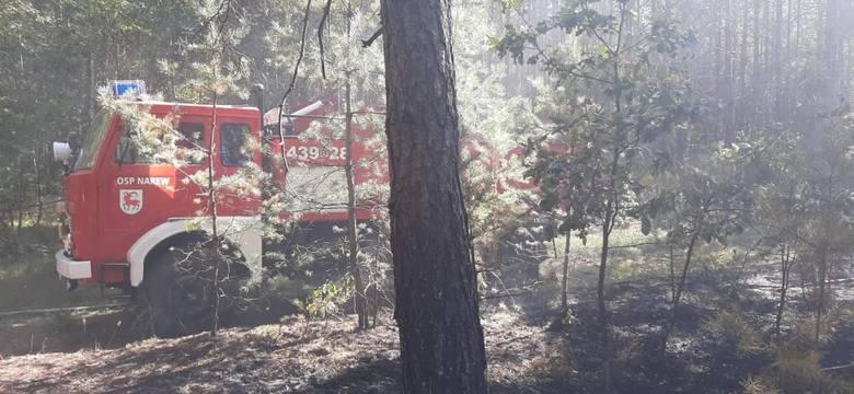 Pożar lasu w okolicy miejscowości Waniewo w gminie Narew