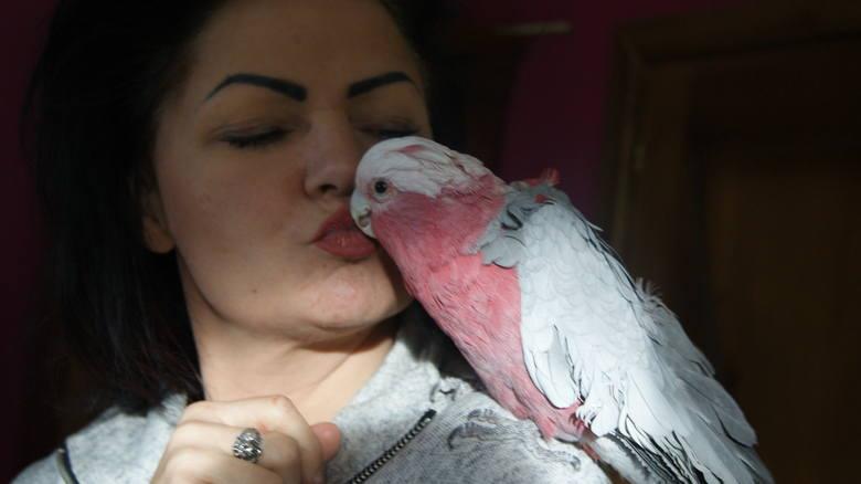 Tamara i Tilia. Papużka już nigdy nie wróci do pełnej sprawności