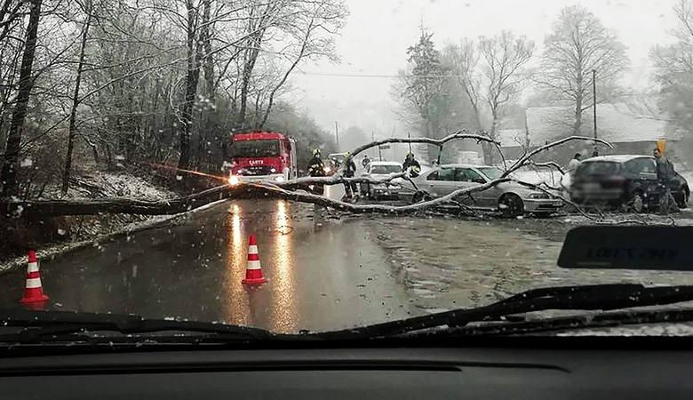 Korzenna. Runęło drzewo. Uszkodziło dwa samochody