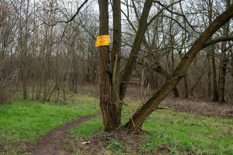 Urzędnicy postawili barierki i tablice ostrzegawcze w pobliżu niebezpiecznego miejsca, ale na samej skarpie wciąż nie ma żadnych zabezpieczeń. Nadal można na nią wejść i spaść do rzeki, zwłaszcza w ciemnościach. Szef PINB Paweł Łukaszewski zapowiada, że raz jeszcze przyjrzy się temu...