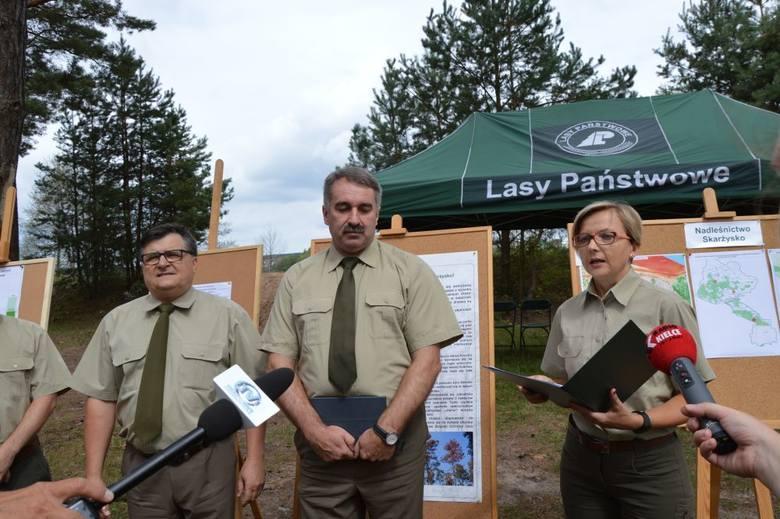 Tysiące zaatakowanych przez maleńkie chrząszcze drzew zostanie wycięte nad zalewem Lubianka w Starachowicach. Leśnicy ruszają do obrony lasów. Grozi
