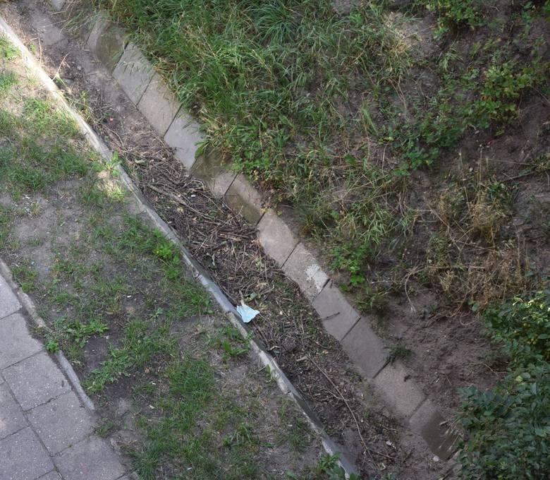 Mur czy chodnik w okolicach Władysława IV w Zielonej Górze wymagałby naprawy.