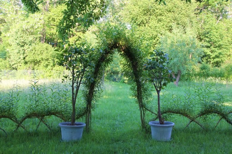 Elementy małej architektury można wykonać z żywych roślin.