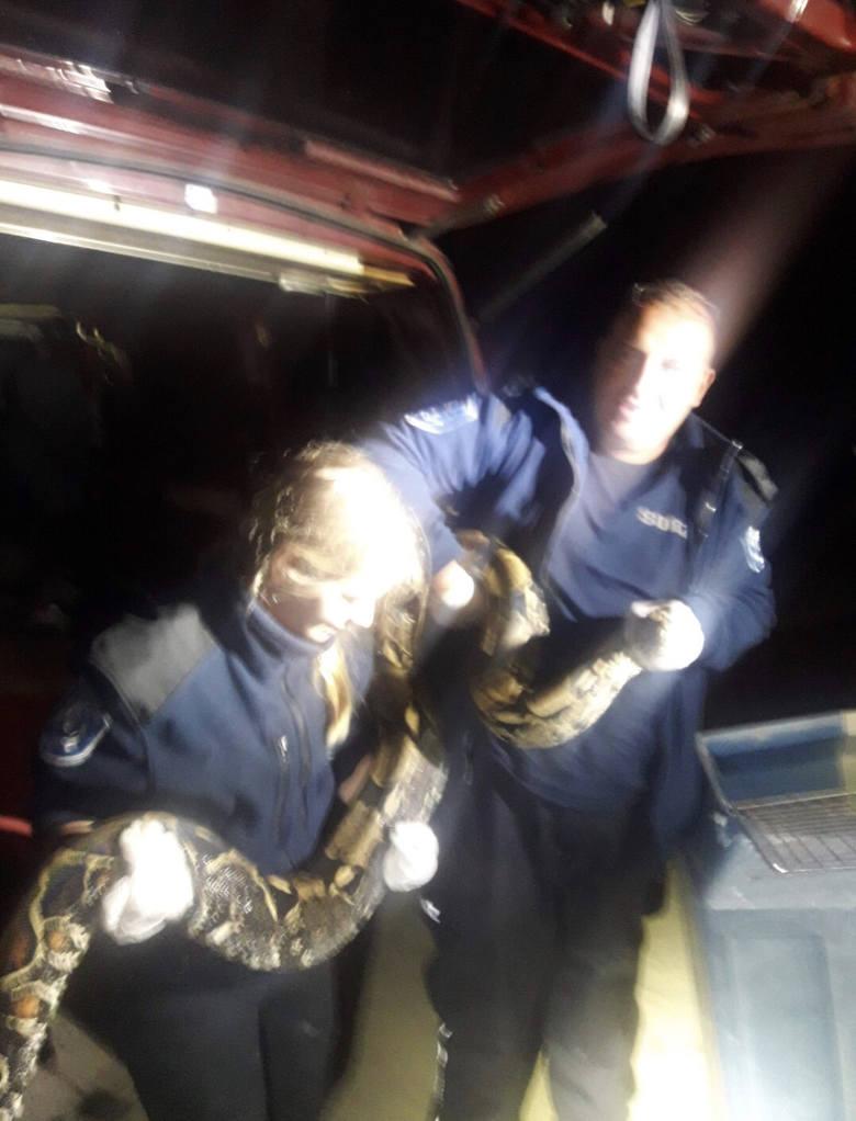 Nietypowa interwencja na Białołęce.  W samochodzie mężczyzny, który miał grozić innemu mężczyźnie znaleziono dwa węże boa.