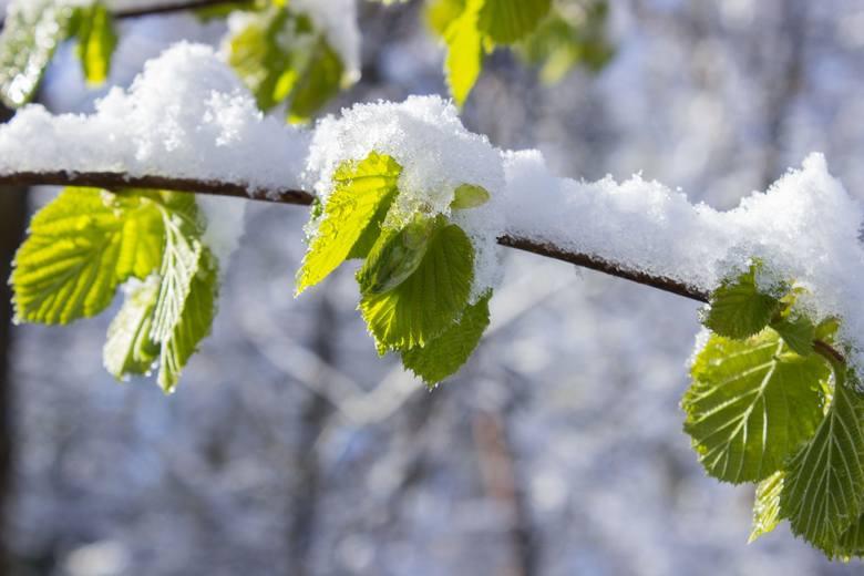 Niż Mareike przyniesie załamanie pogody, nadciąga chłodny front, mróz i śnieg