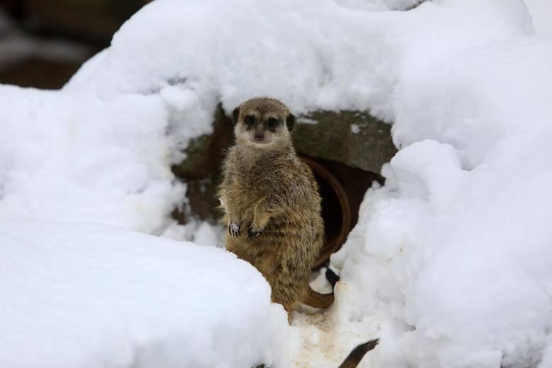 25-26 grudnia, godz. 10:00-16:00 Święta w Ogrodzie Zoobotanicznym, ul. BydgoskaW okresie świątecznym można będzie odwiedzać tradycyjną szopkę, a w jej