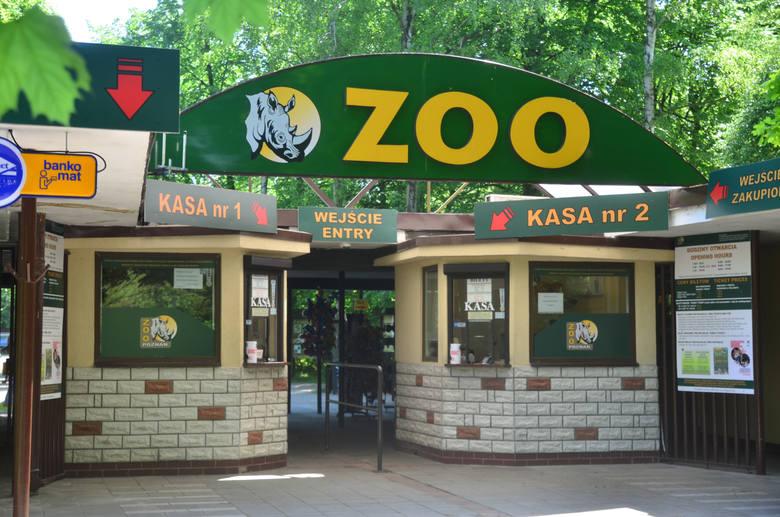Nowe Zoo w Poznaniu ponownie otwiera się w piątek, 19 czerwca.