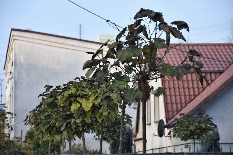 Wycięto park. Zamiast walczyć o drzewa, miasto zmieni przeznaczenie działki na usługową?