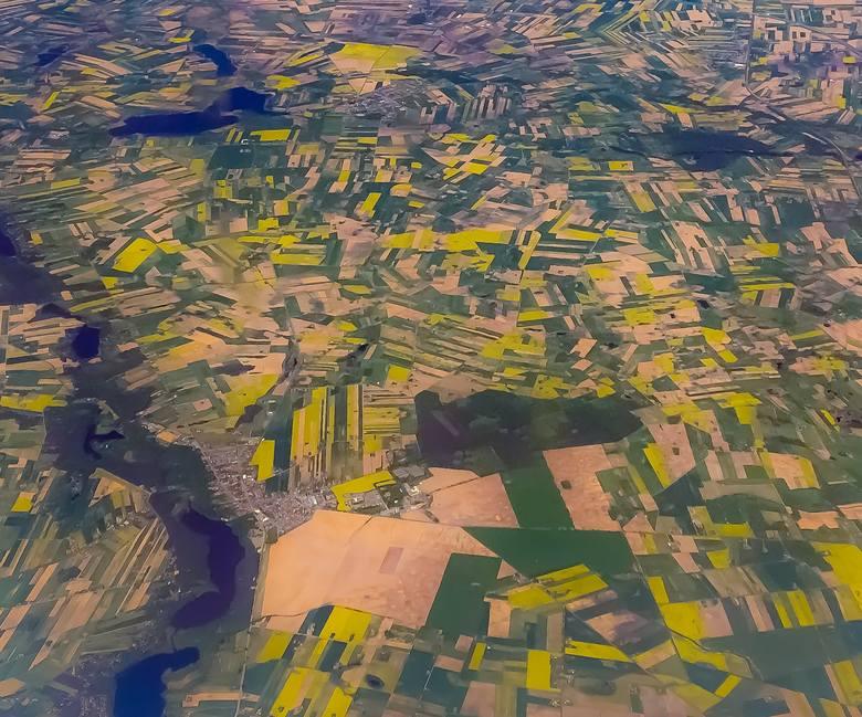 W Polsce i Europie kwitną pola rzepaku. Doradcy rolni szacują, że jest ich mniej niż przed rokiem z powodu mrozów bez okrywy śnieżnej w okresie przedwiośnia.