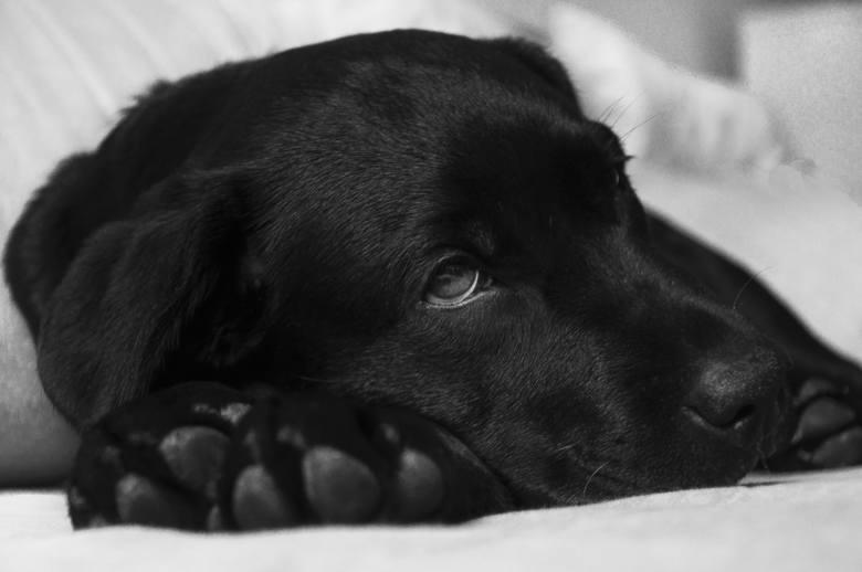 Tym możesz zabić swojego psa! 11 przysmaków, od których może się pochorować