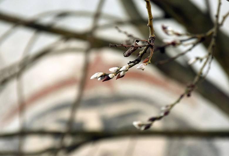 pogoda na wiosnę długoterminowa prognoza pogody na wiosnę 2020 kiedy będzie ciepło pogoda na kwiecień pogoda na maj pogoda na majówkę