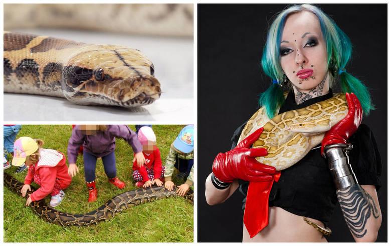 Rozmawiamy z Martyną, znaną jako Marilyn Rosa, właścicielką hodowli węży, specjalistką od gadów egzotycznych, behawiorystką zwierzęcą i aktywistką ratującą