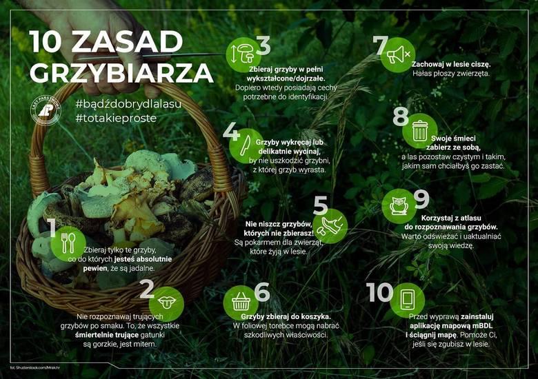 10 zasad grzybiarzaźródło: Lasy Państwowe