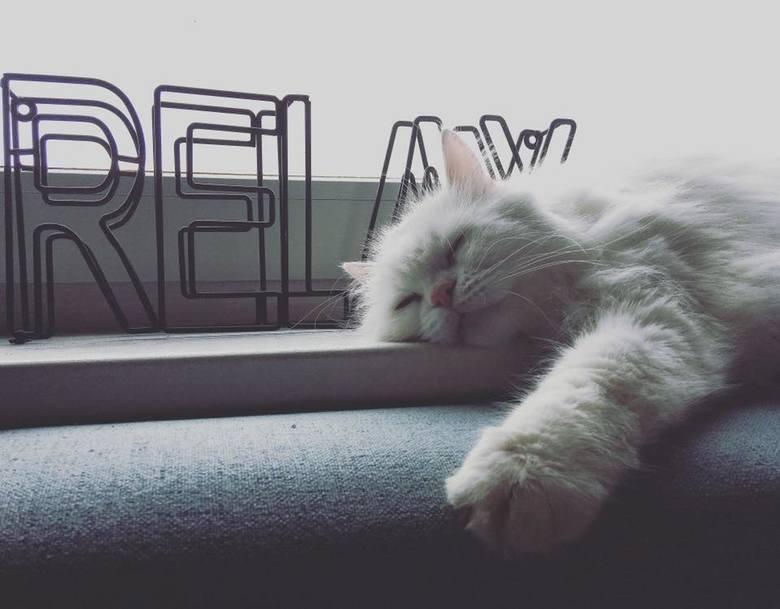 Niestety, ale nasi najwięksi przyjaciele, czyli zwierzęta, nie są w stanie wyrazić słowami nam swojego uczucia. Sprawa ta wydaje się być jeszcze bardziej skomplikowana w przypadku kotów: mówi się, że chodzą one ścieżkami i nie czują więzi ze swoim właścicielem. To nie prawda! Kot też okazuje, że...
