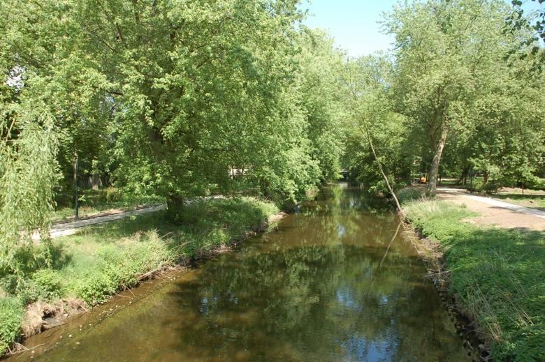 Trwa rewaloryzacja zabytkowego parku miejskiego w Rawie Mazowieckiej. Zaprezentowane zdjęcia obrazują zmiany, jakie już zaszły w jednym z najpiękniejszych