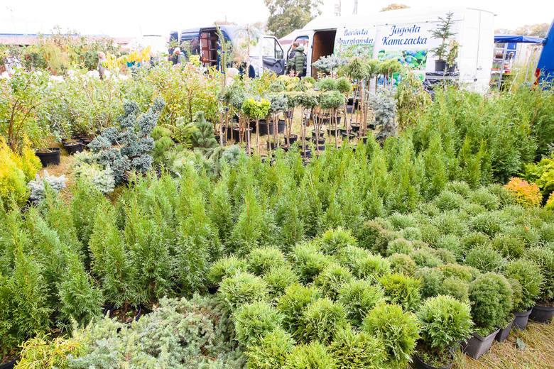 Szukasz oryginalnych roślin?  W najbliższą sobotę lub niedzielę warto się wybrać do Szepietowa