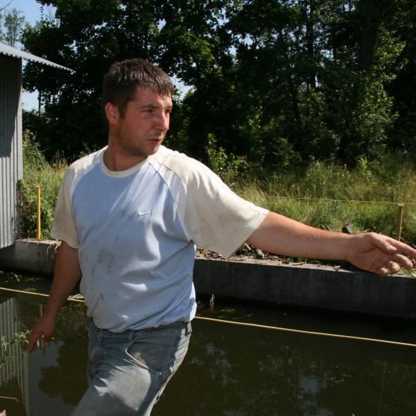 - Dzik pewnie wpadł do tego kanału - pokazuje Tomasz Zawierucha z Ochotniczej Straży Pożarnej w Morawicy.