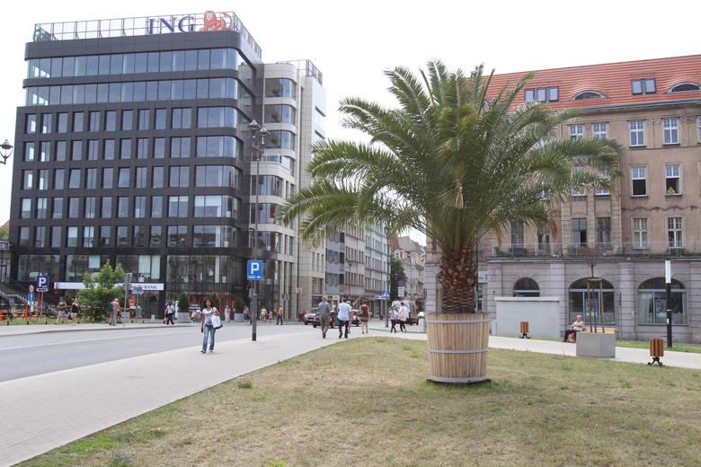 Palmy w Gliwicach i Katowicach