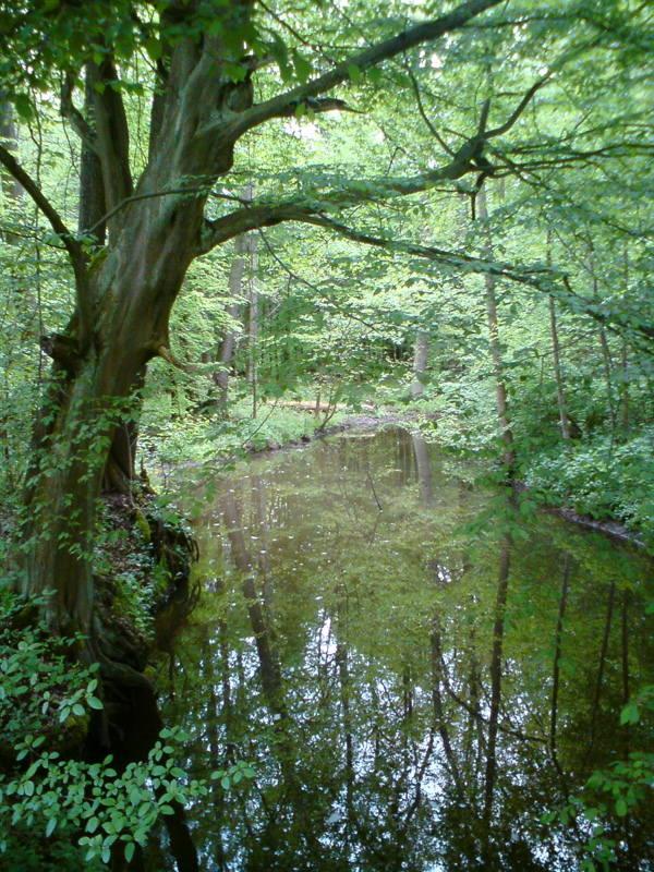 Las Odrzański - okolice Krępy