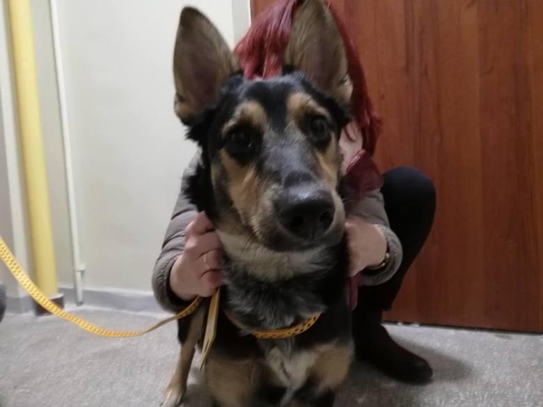 Społecznicy z zielonogórskiego Biura Ochrony Zwierząt zostali zaalarmowani przez sąsiadów o wyjącym od czterech dni psie na jednym z zielonogórskich