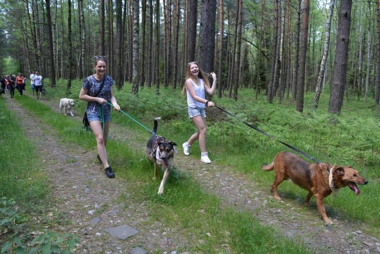 Tak było na poprzednim Dog Trekkingu w Jasieniu.