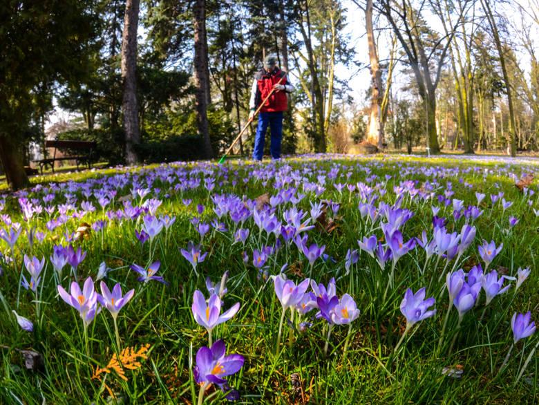 Pierwszy Dzień Wiosny 2018. Prognoza pogody na wiosnę