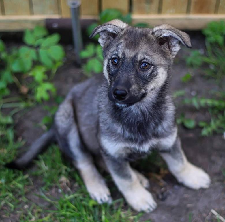 Jeden z porzuconych szczeniaków ma już dom. Lili czeka na adopcję