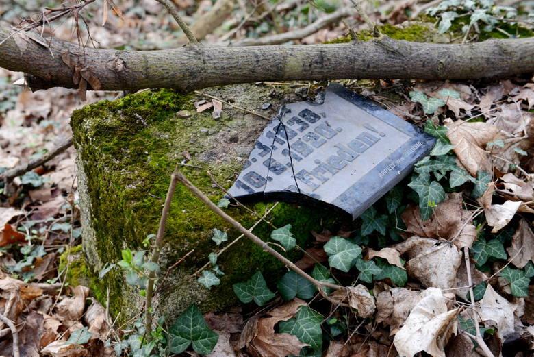 Tajemnice nagrobków skrytych wśród drzew