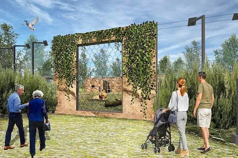 Wybieg dla lwów i tygrysów w zoo w Opolu - wizualizacja