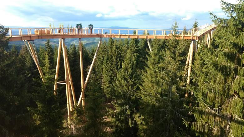 W Tatrach pospacerujemy w... koronach drzew [ZDJĘCIA]