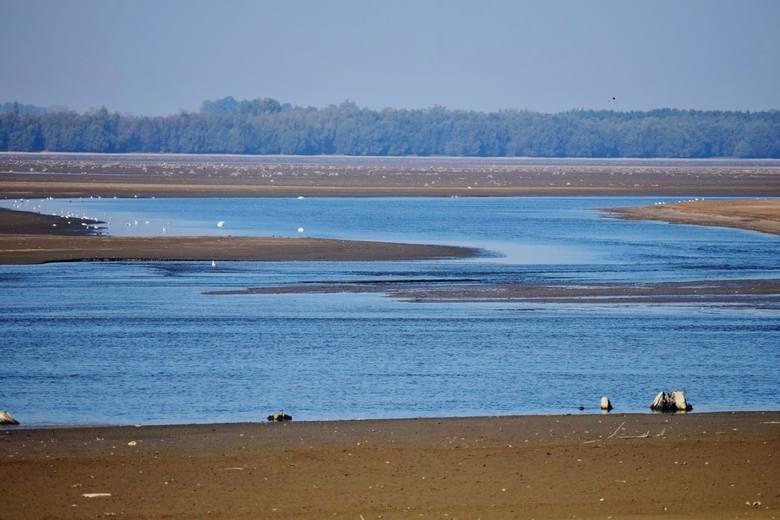 Zbiornik Jeziorsko wysycha. Czy województwo łódzkie stanie się pustynią?