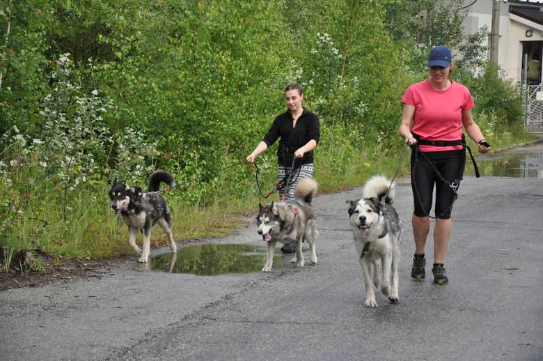 Na chętnych biegaczy czekają m. in. Szogun, Max, Roki i John, którzy bardzo potrzebują pobiegać