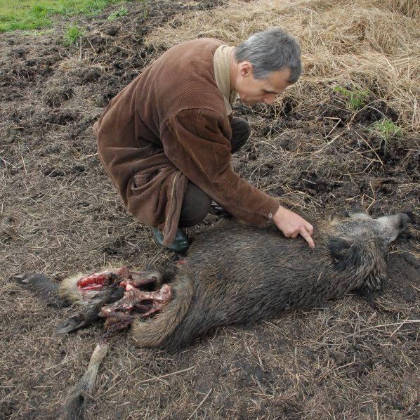 - Zwierzęta z parku, zwabione na jedzenie, są potem legalnie zabijane. To niepojęte - ocenia Zenon Kruczyński były myśliwy, obecnie ekolog z Pracowni