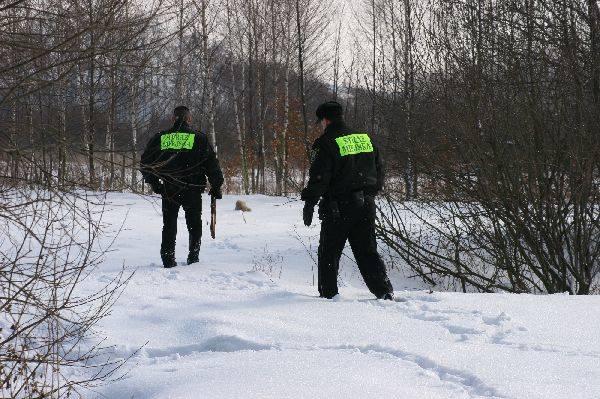 Oblawa na psa z podejrzeniem wściekliznyWspólnie z lekarzem z Powiatowego Inspektoratu Weterynarii w Jaroslawiu straznicy zdecydowali, ze psa nalezy